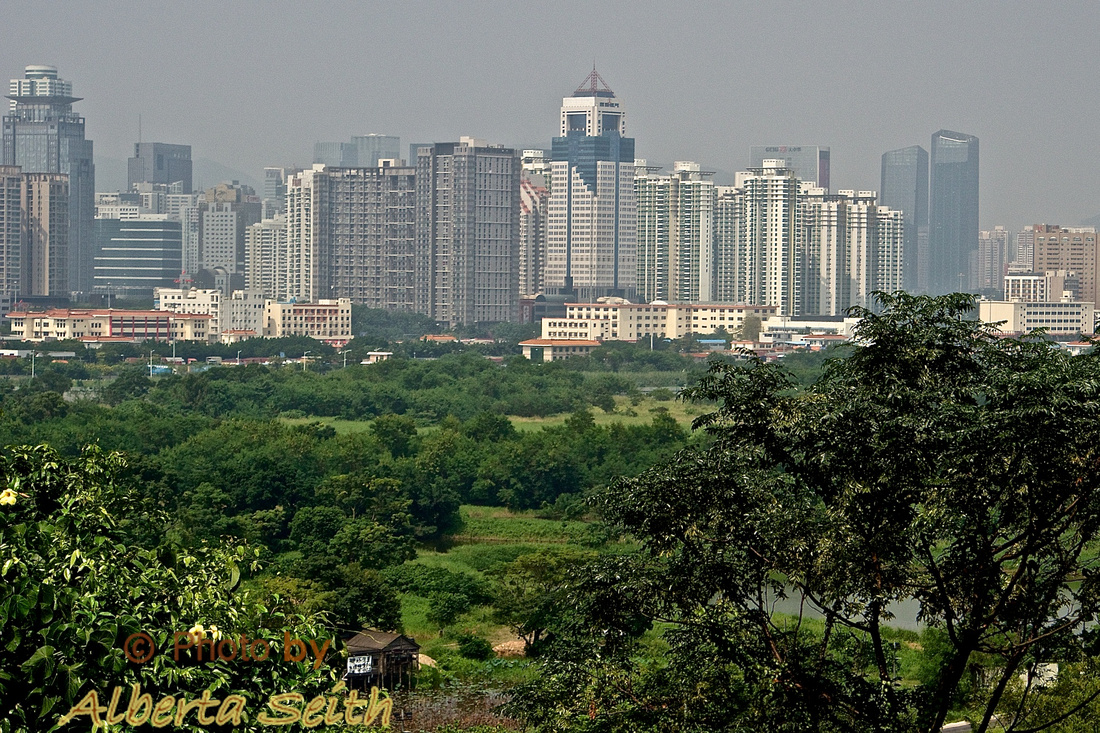 Lok Ma Cha Garden overlooking houses  and Shenzhen, China