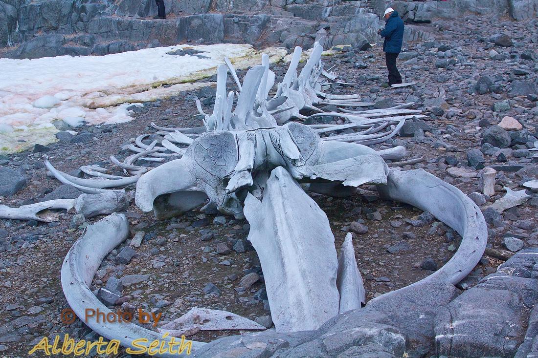 Climbing the rock at Jougla Point