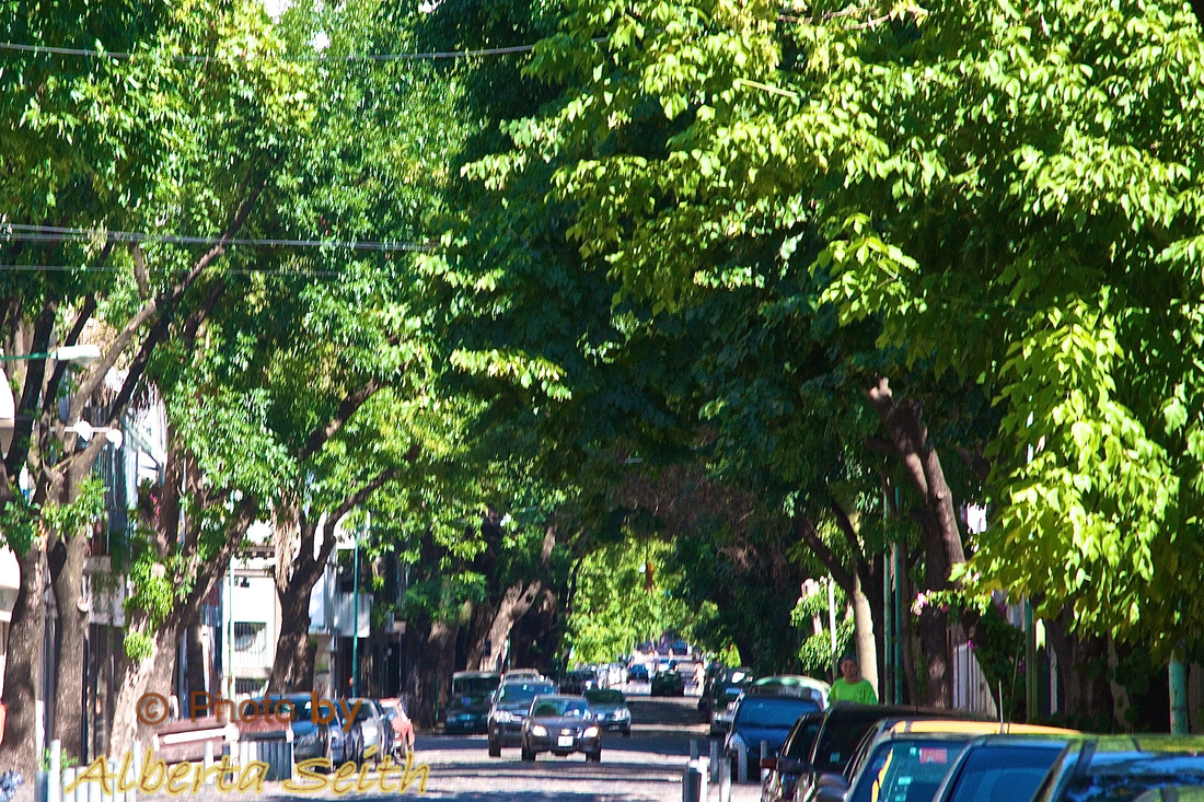 Canopied streets, Buenos Aries