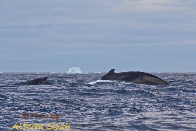 Mother and baby humpback at Point Wild