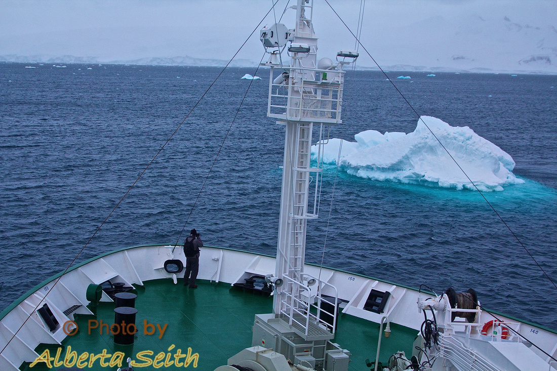 Icebergs and Packed Ice
